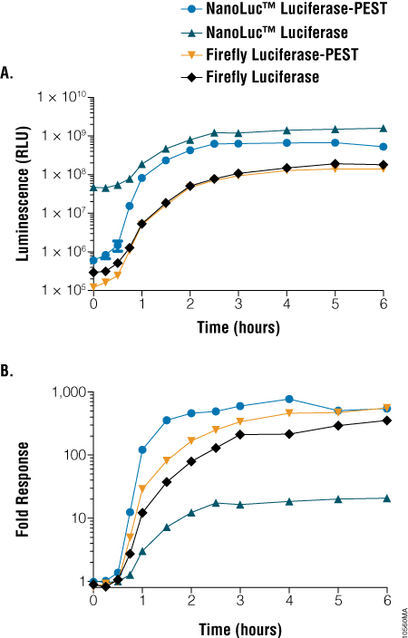 A comparison of light output and response dynamics between NanoLuc® and firefly luciferase constructs.