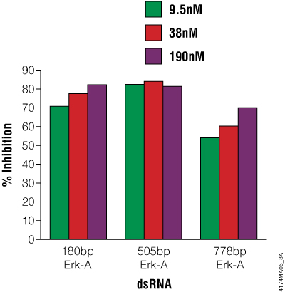 Effect of Erk-A dsRNA length and concentration on Erk-A protein levels expressed as a percentage of the untreated control.